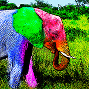 Digitally enhanced image of a young elephant
