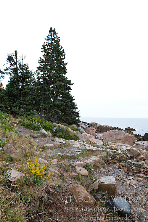 Ocean Path trail, Acadia National Park, Maine, United States of America