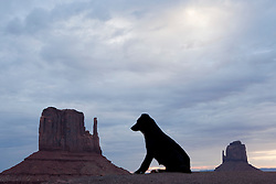 North America, Arizona, Four Corners, Monument Valley Tribal Park, dog and East Mitten and West Mitten Buttes