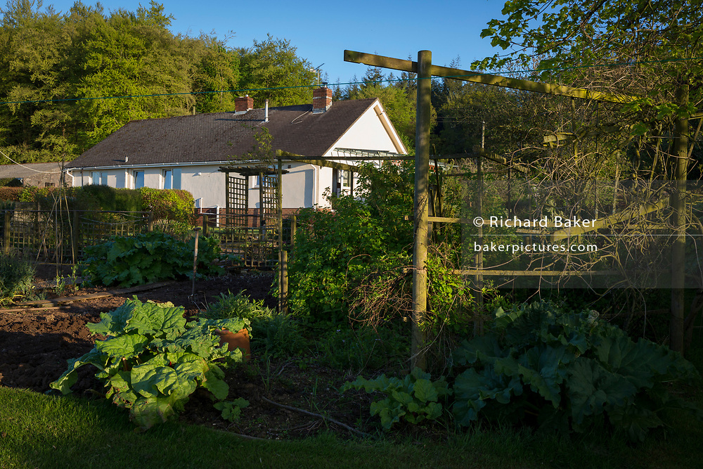A rural bungalow with on fertile land where homegrown veg and fruit like rhubarb is produced, on 5th May 2018, in Wrington, North Somerset, England.