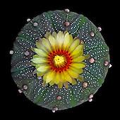 Cactaceae Portfolio IV: More American and Mexican Species