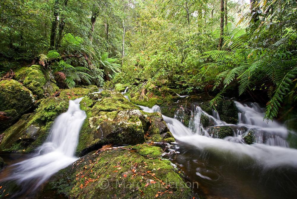 Flowing stream in temperate rainforest, Barrington Tops National Park, Australia