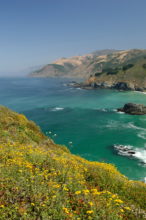 Flowers, Big Sur Coast, Highway 1, Cabrillo Highway, south of Pfeiffer Big Sur, California, United States of America
