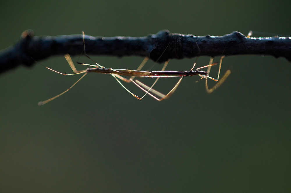 Greece, Meteora, mating insects