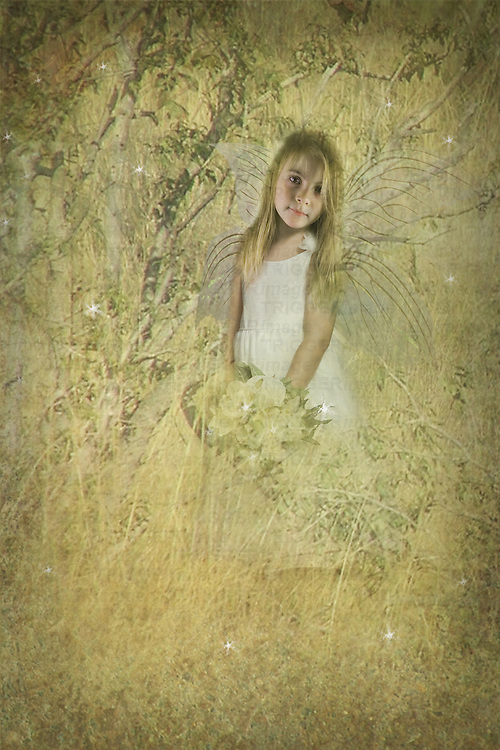 young fairy child standing in a golden field with flowers