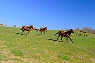 Horses, Ranch, Montauk, Long Island, NY