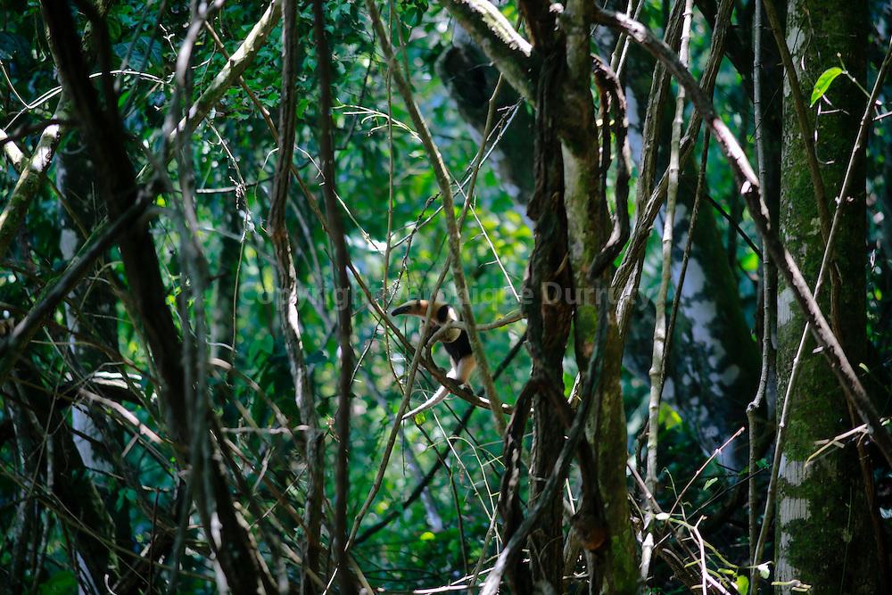 Corcovado National park, Costa Rica // Parc national Corcovado, Costa Rica