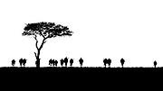 Wildebeest walking the plains of the Masai Mara