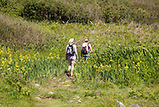 Two people walking the coastal footpath, Lowland Point, Lizard Peninsula, Cornwall, England, UK