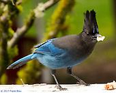 New Birds