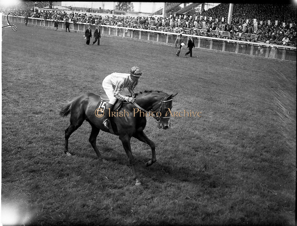 21/06/1961<br /> 06/21/1961<br /> 21 June 1961<br /> Irish Derby at the Curragh Racecourse, Co. Kildare. Image shows one of the runners in the race.