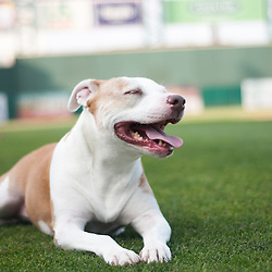 Princess for the Reno Aces & Nevada Humane Society
