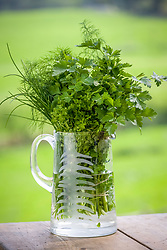 A glass jug filled with harvested herbs
