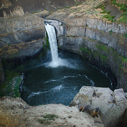 Palouse Falls and Marmot (Marmota flaviventris), Palouse Falls State Park, Washington, US