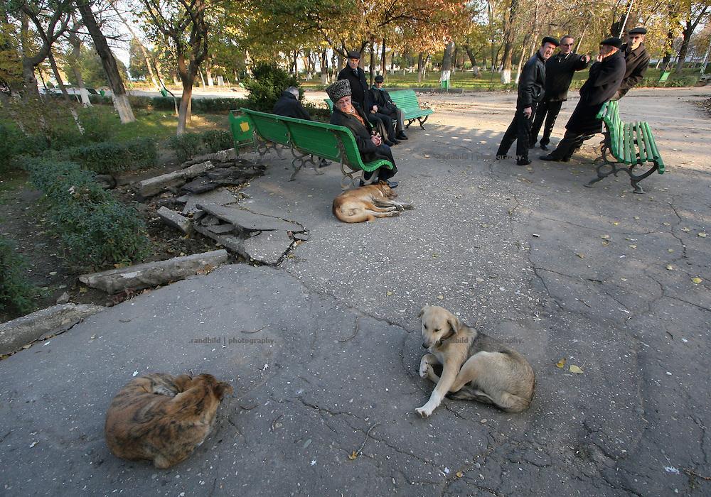 Ein paar Männer und Hunde langweilen sind in einem Park in Machatschkala, Dagestan. A few men and dogs in a park in Makhachkala, Dagestan.