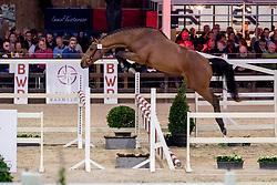071, Happy Landais<br /> BWP Hengstenkeuring -  Lier 2020<br /> © Hippo Foto - Dirk Caremans<br />  17/01/2020