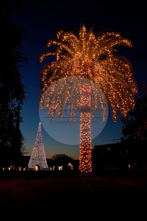 Fairy lights decorate a palm tree alongside a christmas tree in Marion Square Charleston, SC. (photo by Charleston SC photographer Richard Ellis)