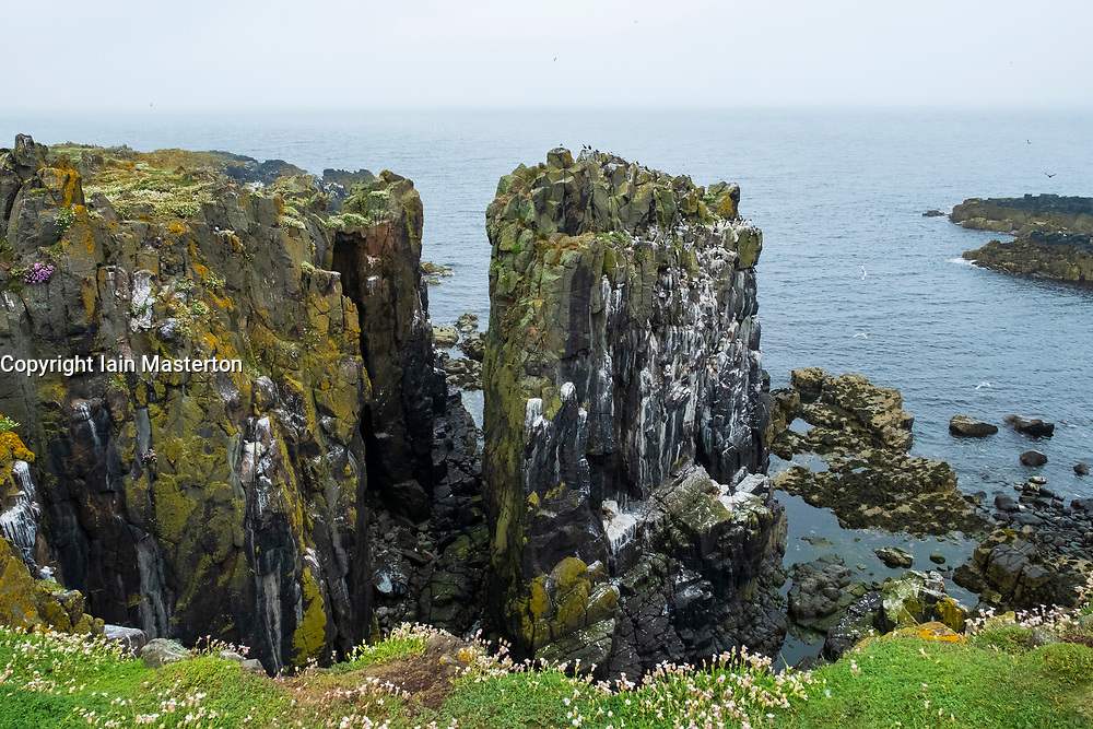 Cliffs at Lady's Bed on Isle of May National Nature Reserve, Firth of Forth, Scotland, UK