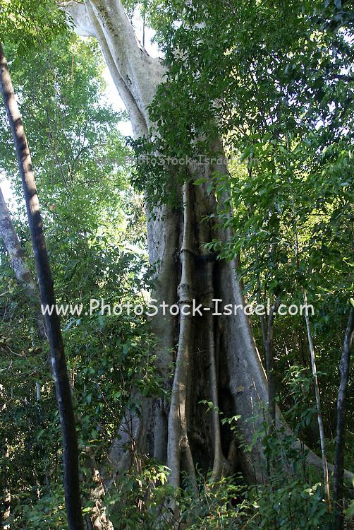 Madagascar, Ankarana Special Reserve.