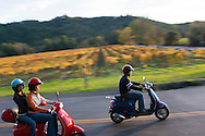 Two women and one man ride Vespa motor scooters past a vineyard with fall colors in Sonoma County, California.