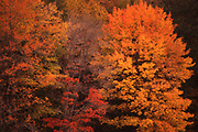 Fall leaves, orange and red, Pennsylvania