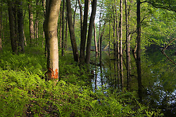 Flood waters in the Mill River, near its confluence with the Connecticut River at Mass Audubon's Arcadia Wildlife Sanctuary in Northampton, Massachuetts