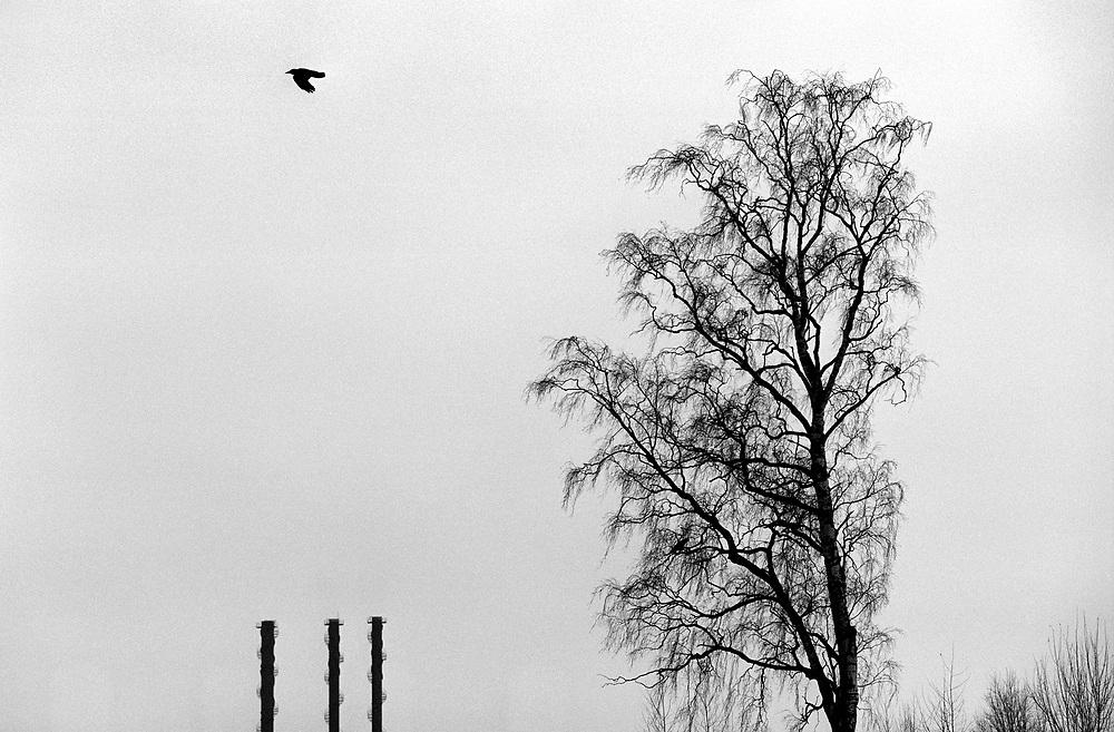 ©2003. För 30 år sedan var den tjocka röken från skorstenarna på järnverket en symbol för välstånd och framgång. Nu är röken ett minne blott och föroreningarna betydligt decimerade. Borlänge ligger långt framme på miljöområdet och idag är det en stad i förändring , från industriort till någonting annat. Foto: Markus Marcetic