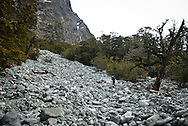 A rock avalanche of river boulders cut through the forest on the mountainside of Clifton Canyon, Milford Track, Fiordland, New Zealand