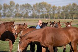 Moerings Geert, tussen de veulens<br /> Stal Moerings - Roosendaal 2018<br /> © Hippo Foto - Dirk Caremans<br /> 15/10/2018