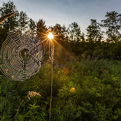 A spider web in the morning in a field in Meredith, New Hampshire.