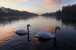 © Licensed to London News Pictures. 24/01/2017. Leeds, UK. The sun rises over the lake on a bitterly cold and frosty morning at Roundhay Park in Leeds, West Yorkshire. Temperatures have dropped below freezing this morning across the country causing travel problems for many commuters. Photo credit : Ian Hinchliffe/LNP