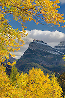 Mount Oberlin framed in the golden foliage of Cottonwood trees. Seen from yhr Going To The Sun Road in Glacier National Park Montana USA