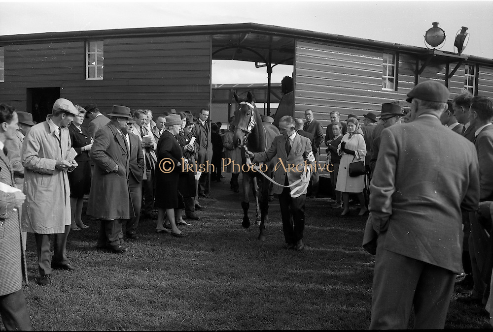 24/09/1963<br /> 09/24/1963<br /> 24 September 1963<br /> Goffs September Bloodstock Sales at the RDS, Dublin. Mr Philip Love's Charlottesville bay filly, which was sold to Paddy Pendergast for 12,500 guineas, is led away after the sale.