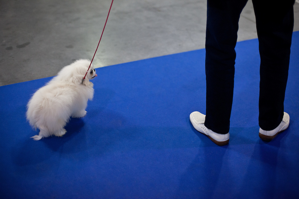 A man with white shows is training his dog during the Prague Expo Dog Exhibition.