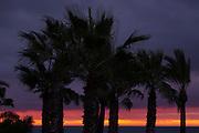 ESTEPONA - 04-01-2016, AZ in Spanje 4 januari, zonsopkomst, palmbomen
