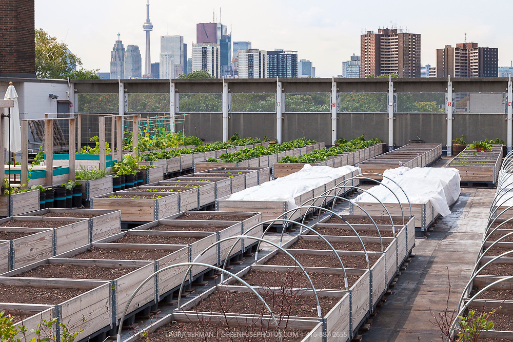 Eastdale School Grown Rooftop Garden