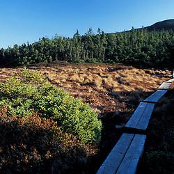 Wooden footbridge through a high elevation bog on Mount Jackson.  White Mountain N.F. Appalachian Trail.