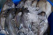 Hat Chaweng (beach). The market. Fresh fish.