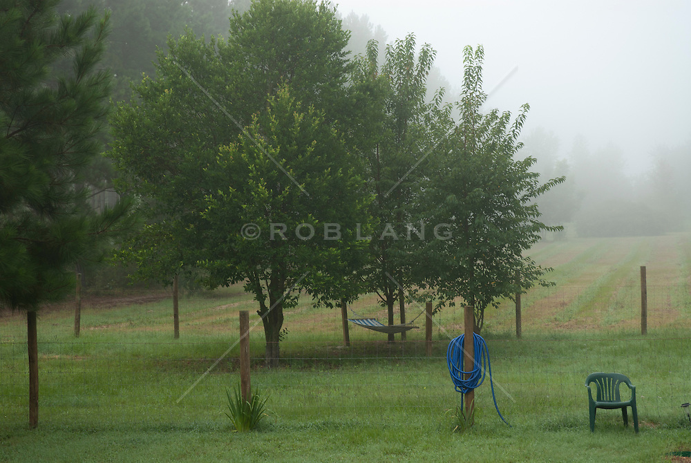 foggy day at a farm in South Carolina