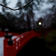 Water drops on a barren tree branch at Hirosaki Castle. Snow is already present before the official start of winter.