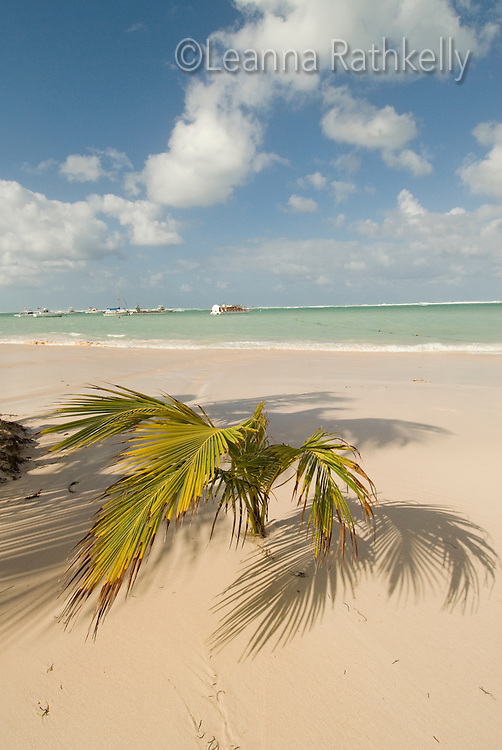 The white sand, turquoise ocean and palm trees make the tropical Bavaro Beach a popular destination for travellers to the Dominican Republic.