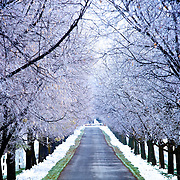 The road leading into Zollinger's Orchard in Logan, Utah Dec. 6, 2010.