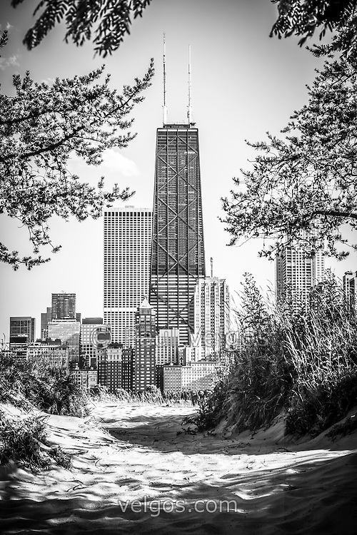 Hancock Building through trees black and white photo. The John Hancock Center building in Chicago is one of the world's tallest buidings. Photo is vertical, high resolution and was taken in 2012.