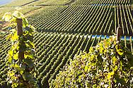 Europe, Germany, Rhineland-Palatinate, Eifel region, vineyards near Mayschoss at the river Ahr.<br /> <br /> Europa, Deutschland, Rheinland-Pfalz, Eifel, Weinberge bei Mayschoss an der Ahr.