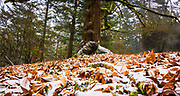 A dusting of snow on fall leaves near the summit of Mount Tabor Park, Portland, Oregon.