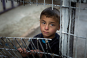 A Palestinian boy stands behind a fence outside a kindergarten that provides a safe haven for Palestinian children in Hebron, Palestine, on March 3, 2016. In the heart of the old city, amid checkpoints, razor-wire fences, military watchtowers and Israeli soldiers, this Palestinian child watches as children from the kindergarten paint messages on the Separation Wall during an activity organised by Zleikha Muhtaseb, a Palestinian woman who has created a safe space for Palestinian children living under Israel's military occupation in Hebron.