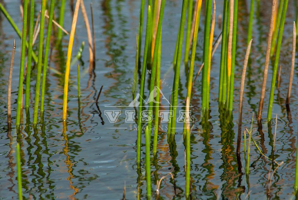 Oficina de fotografia de natureza durante o Festival Floripa na Foto, Parque Municipal das Dunas da Lagoa da Conceicao, Florianopolis, Santa Catarina, Brasil, foto de Ze Paiva