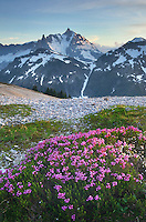 Mount Shuksan viewed from wildflower meadows of Hennegan Peak, Mount Baker Wilderness North Cascades Washington