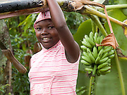 A gril carries a banana tree back to her farm.