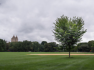 New Linden trees on the Great Lawn in Central Park
